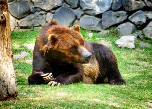 Blogging bear